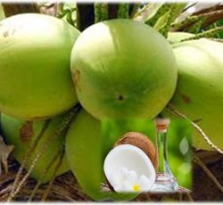 Essential Oil Division Virgin Coconut Oil 1 virgin_coconut_oil